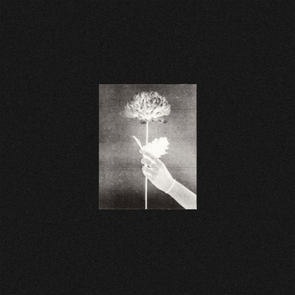 Day By Day - White Flowers - LP
